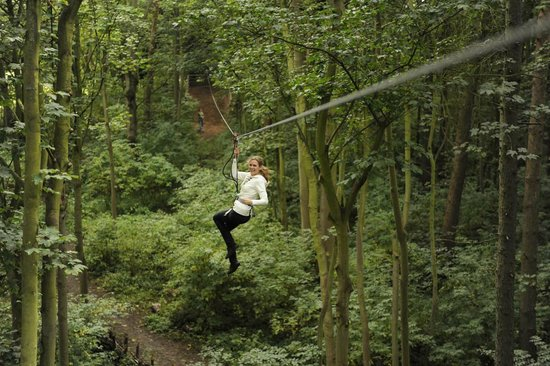 Go Ape Treetop Adventure Course: Go Ape Treetop Adventure