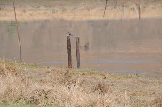 Sani Valley Lodge and Hotel: early morning kingfisher