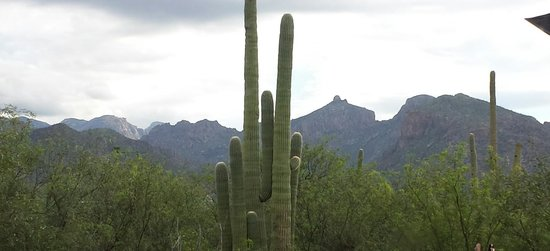 Mt. Lemmon Scenic Byway: View from Sabino Canyon area