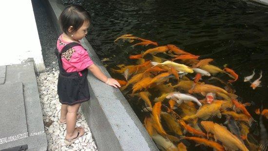 HOM Platinum : Bermain bersama Ikan