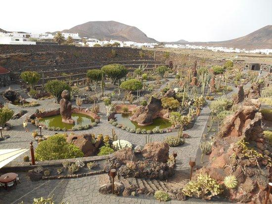 Vistas zona de atr s desde arriba picture of jardin de for Jardineras de cactus