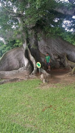 Epic Adventure Tours - Private Day Tours: largest tree on the island