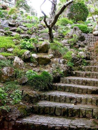 Wellington Botanic Garden: Botanical Gardens 3