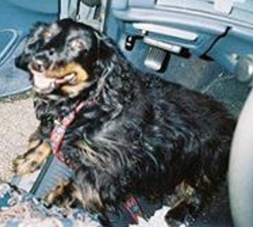 Dog missing from Days Inn Thermopolis