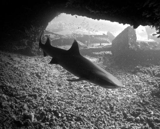 Island Divers Hawaii: Sharks