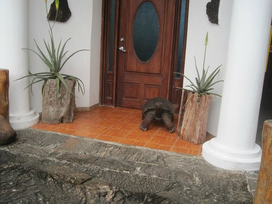 Galapagos Island Hotel - Casa Natura: Front door--no it's not a real tortoise!