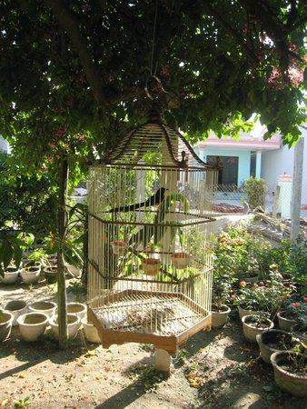 Petunia Garden Homestay : Een blik op de tuin
