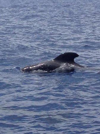Eden Catamaran: Short finned whales :)