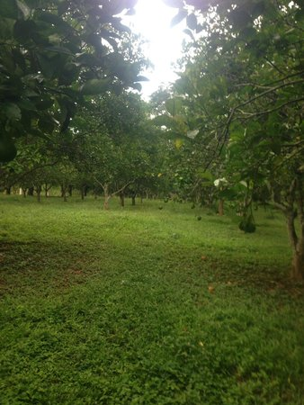 Table Rock Jungle Lodge: You can pick oranges from the onsite orange grove
