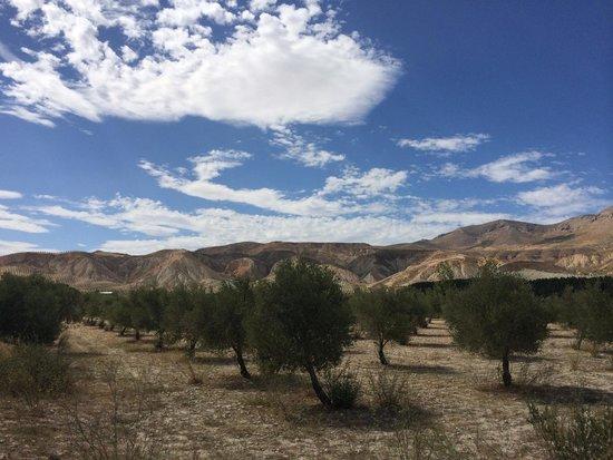 Cuevas Andalucia: Omgeving