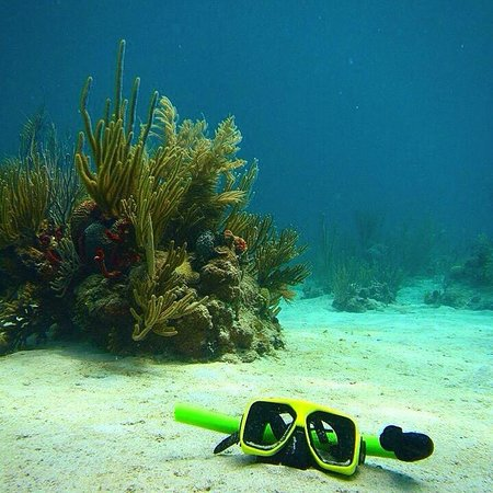 Kayaking Puerto Rico: My snorkel mask sank to the bottom and a guide took this picture came out very cool!