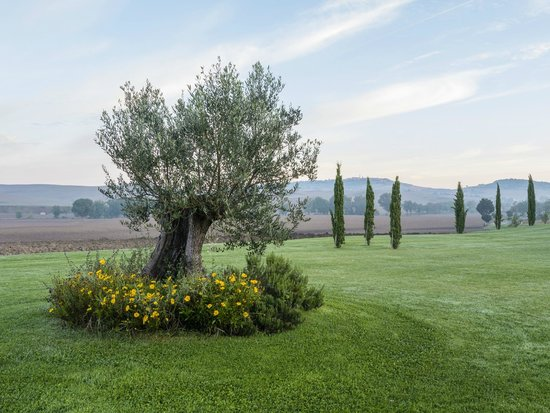 Agriturismo Lunadoro: The lawn near the pool