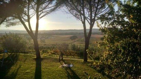 Agriturismo Poggio alle Vigne : View