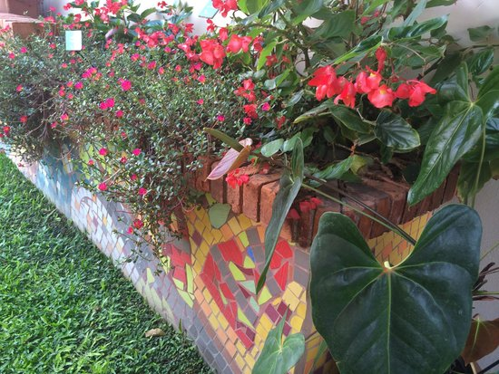 foto flora sabana: