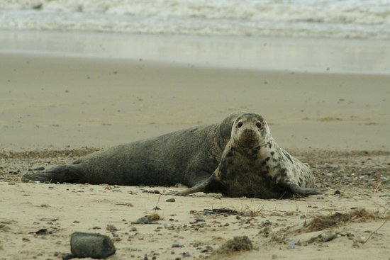 Winterton-on-Sea, UK: pucker area to take a stroll & fab chances of getting close up pics