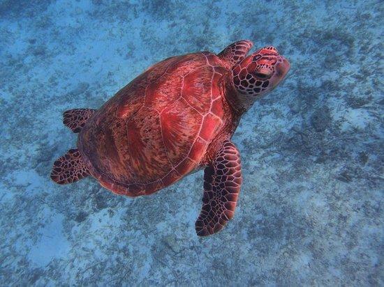 Sea Melt: こんなに近くで一緒に泳げました!