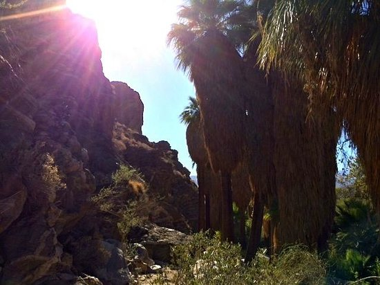 Desert Adventures Red Jeep Tours & Events: Palm Springs Tour