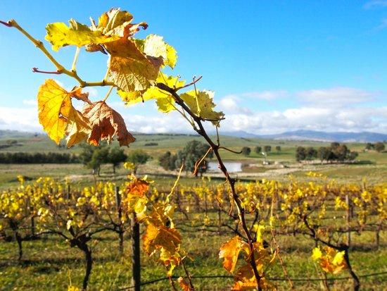 Delatite Wines: Autumn at the winery