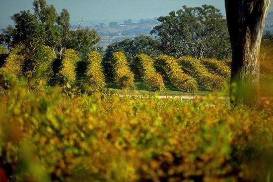 Delatite Wines: Pinot vines