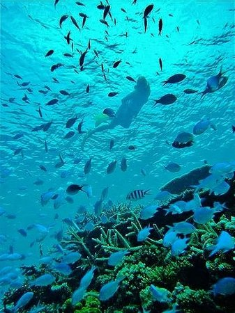 Makaira Resort : Snorkel out front