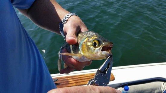 Captain Ron's Lake Arenal Fishing Tours