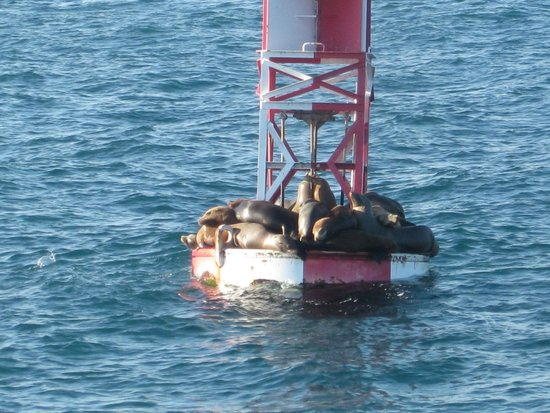 Newport Landing Whale Watching: Sunbathing sea lions
