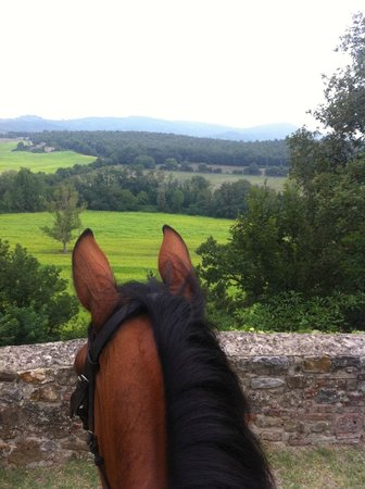 Agriturismo Centro Ippico della Berardenga: Beautiful Tuscany