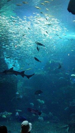 Enoshima Aquarium : 大水槽1