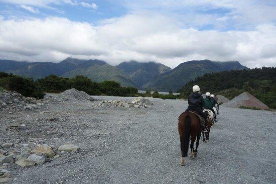 Glacier Country Horses: Boris