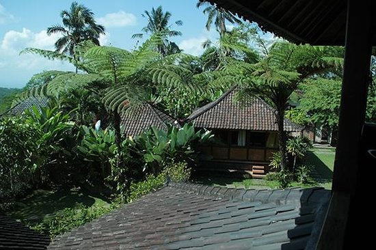 Bali Mountain Retreat : view of the property