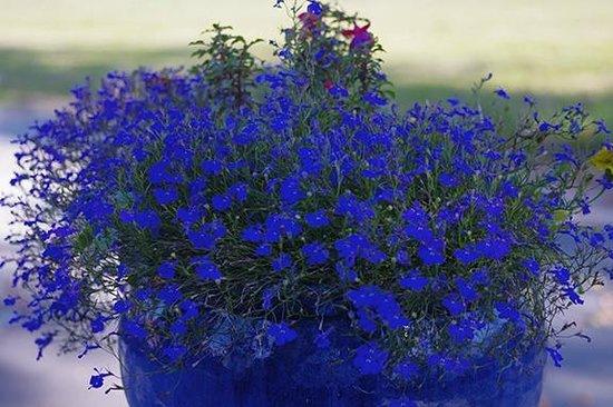 Schloss Schadau: Beauty in Blue