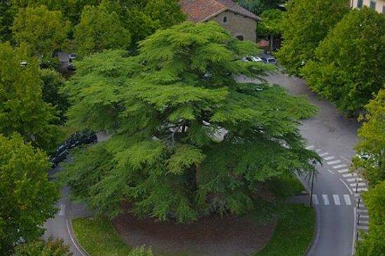 Castello dei Conti Guidi di Poppi: Halfway up the tower... I hugged the tree when I came down :)