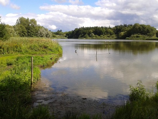 The Harvest Mouse Cafe Limited: the view from the adjacent bird hide
