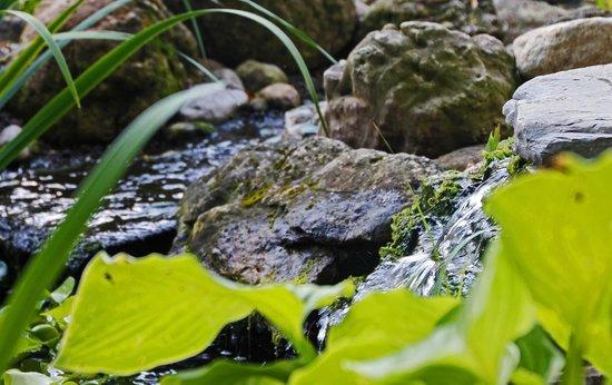 Schoolmaster's House Bed and Breakfast: Garden waterfall