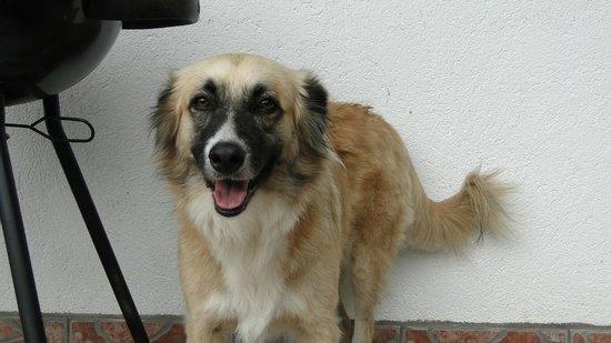 Ceiba Tree Lodge: Flash, der sympathische Hund des Hauses