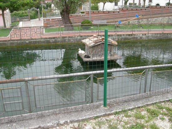 Il laghetto con papera foto di il laghetto santa maria for Il laghetto