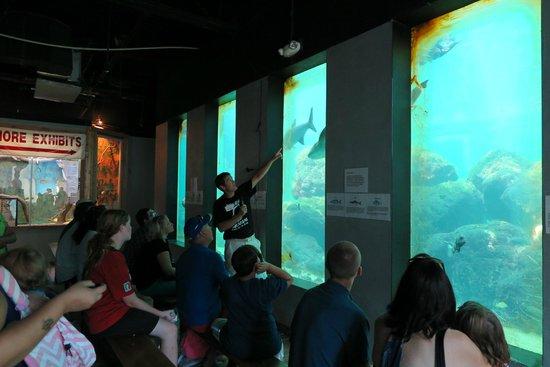 Konger Tarpon Springs Aquarium: Das größte Becken