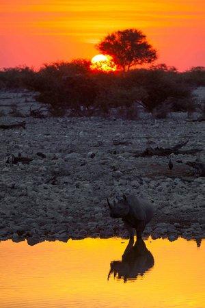 Etosha National Park, Namibia: Rino in the sunset