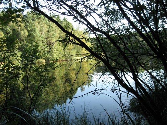 Hoge Kempen National Park : Droogmeervijver