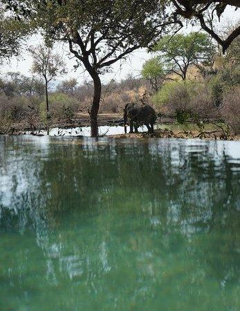 Tuningi Safari Lodge: view over pool to waterhole