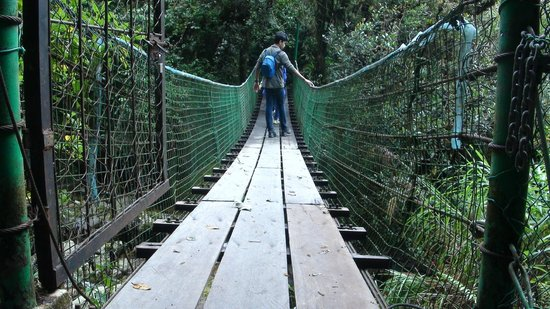 Sutera Sanctuary Lodges: On the Nepenthes trail