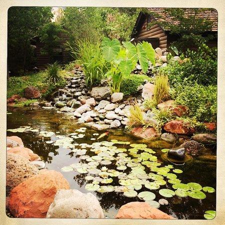 L'Auberge de Sedona: Koi Pond