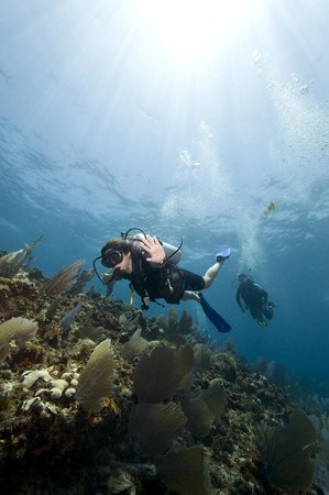 Solo Buceo Dive Shop : Want to dive?