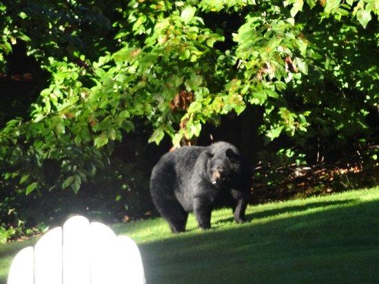 Carter Notch Inn: backyard visitor