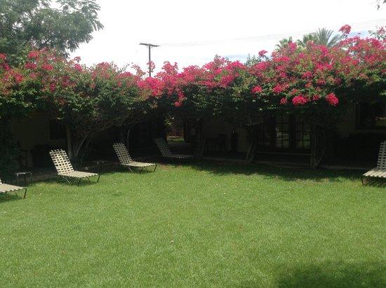 Casa Cody: Loving landscaping
