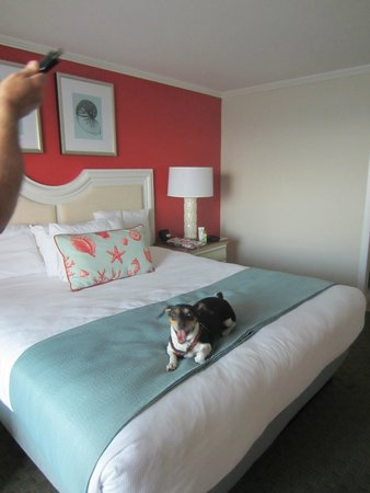 Surfside Hotel & Suites : Jack is thrilled with our room