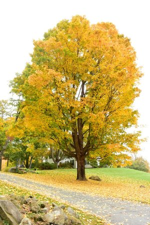 Adair Country Inn & Restaurant: Beautiful tree in front of houae