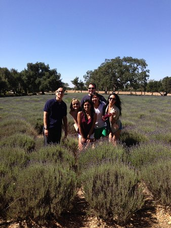 Wine Canyon Tours: Lavender