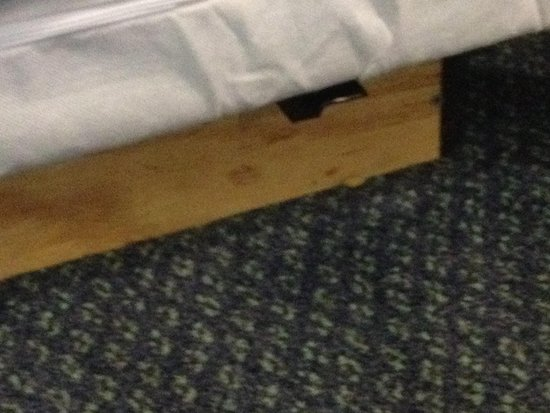 City Studios: Food on floor next to beds left from previous guest