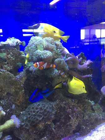 Poulsbo Marine Science Center: They've got the whole gang — Marlin, Nemo, Dory, and even Glil!